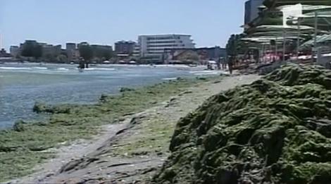 VIDEO! Nordicii vor sa faca ingrasaminte din algele de la Marea Neagra