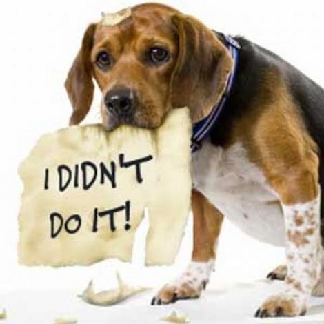 Pensiunea pentru caini - locul unde puteti lasa animalele cand plecati in concediu