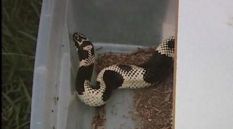 VIDEO! Un american ce traia cu 154 de serpi in casa, arestat dupa ce a fost muscat de una dintre reptile