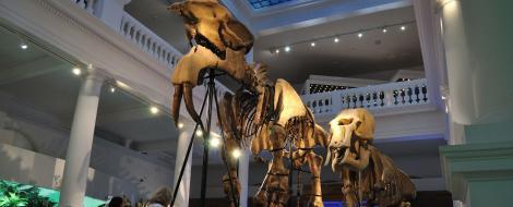 FOTOREPORTAJ! Muzeul Antipa, la concurenta cu marile muzee ale lumii occidentale!