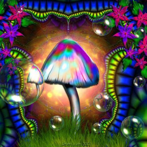 Studiu: O singura doza de ciuperci halucinogene poate altera personalitatea