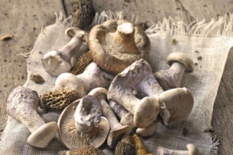 Cum sa cureti si sa depozitezi ciupercile