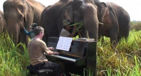 VIDEO! Beethoven pentru elefanti: Un pianist le canta in jungla mamiferelor ranite