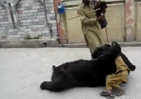 VIDEO! Un copil, imbratisat de un urs