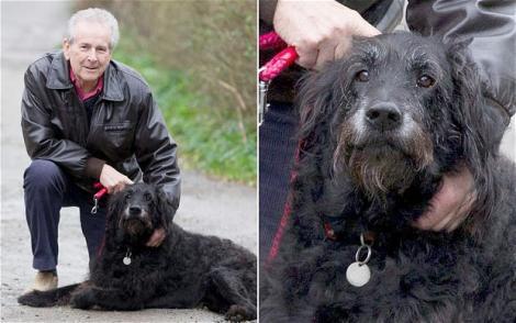 Canada: Un labrador si-a salvat stapanul de la moarte!