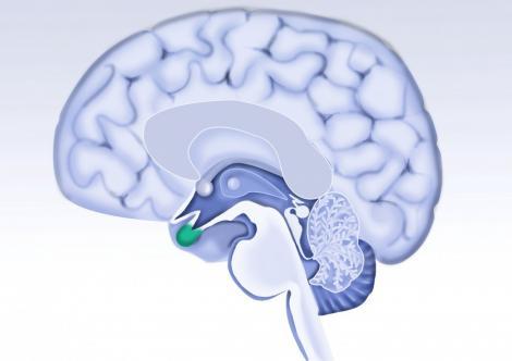 Deteriorarea creierului incepe la 40 de ani