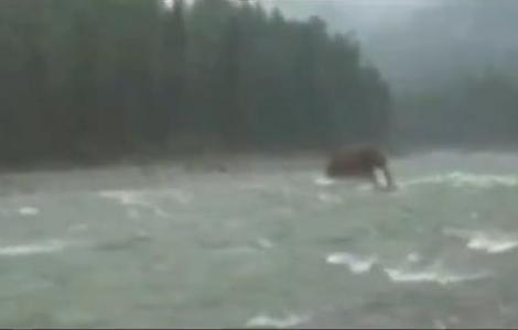 VIDEO! Mamutii inca exista in Rusia?