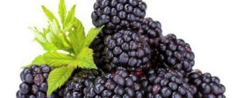 Alimentele mov sunt bogate in antioxidanti!