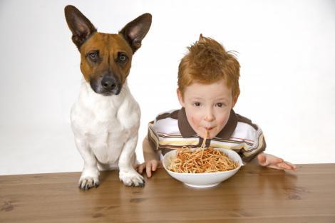 Animalele de companie ii scapa pe copii de alergii