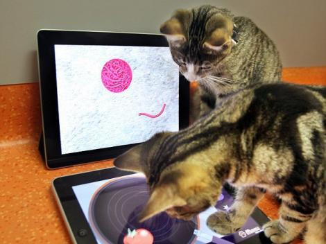 Affection Collection, aplicatia iPad pentru pisici