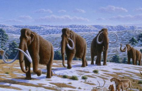 Rusii si sud-coreenii vor sa cloneze un mamut