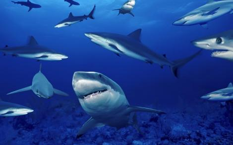 VIDEO! Zeci de rechini s-au adunat la doar 700 de metri de o plaja din Australia