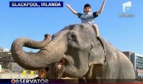 VIDEO! Irlanda: Un elefant a evadat de la circ