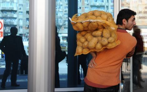 Cumparam cartofi de import, in timp ce productia romaneasca putrezeste in depozite