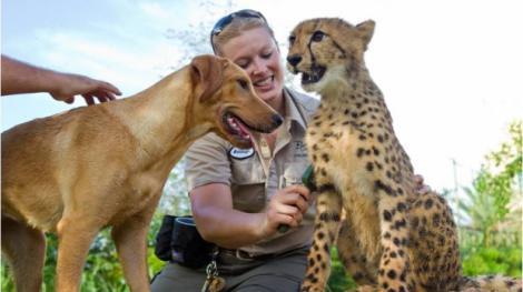 Emotionant: Prietenie trainica intre un ghepard si un Labrador