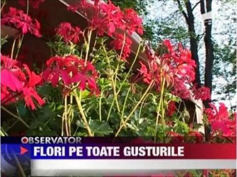 VIDEO! Targul de flori din Braila a atras numerosi vizitatori