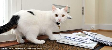 Afla de ce i-a speriat o pisica pe postasii din Marea Britanie!