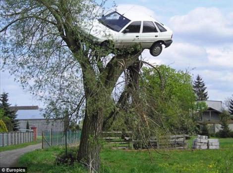 I-au urcat masina in copac pentru ca are un stil de condus periculos
