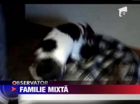 VIDEO! O femela beagle-terrier a devenit mama adoptiva pentru cinci pisoi