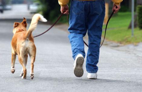 Cum sa previi fuga sau disparitia animalului de companie