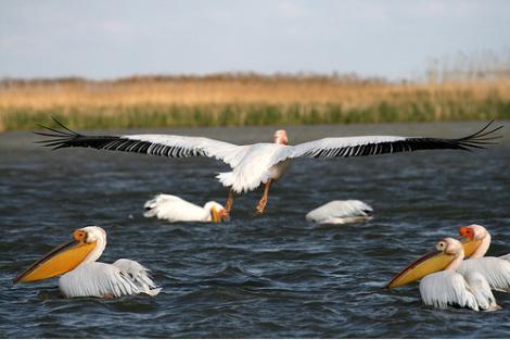 Delta Dunarii, in pericol. Un rezervor cu deseuri toxice din Ucraina ar putea provoca un dezastru ecologic