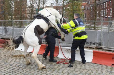 Ce se intampla cand calul nu mai vrea sa fie... calarit