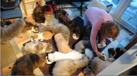 O britanica si-a parasit sotul pentru ca se saturase de cele 40 de pisici ale ei