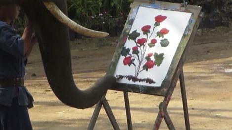 VIDEO! Un elefant face arta cu trompa! Picteaza la fel de bine ca un om