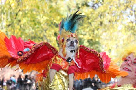 GALERIE FOTO! Costumatii ciudate la parada cainilor pregatiti pentru Halloween
