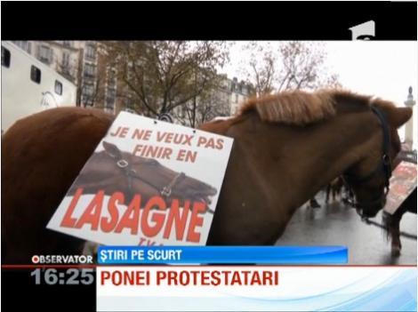 Caii și poneii protestează la Paris, față de creșterea taxelor