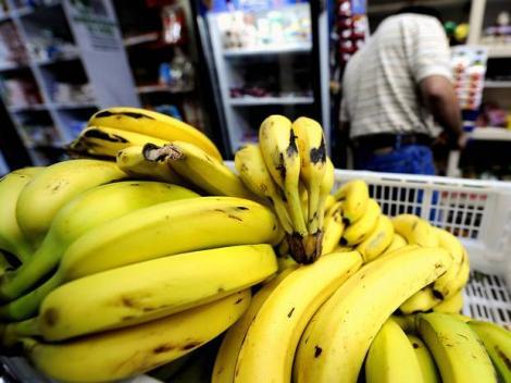 O ciupercă ce afectează bananele poate îmbolnăvi oamenii!