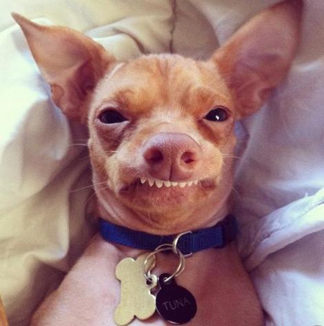 FOTO: Tuna, cel mai ciudat caine, face furori pe internet!