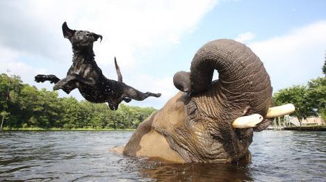 VIDEO! Cum se joaca un catel si-un elefant