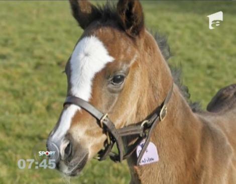 Cel mai preţios cal din lume: Valorează patru milioane de euro, la trei zile de viaţă