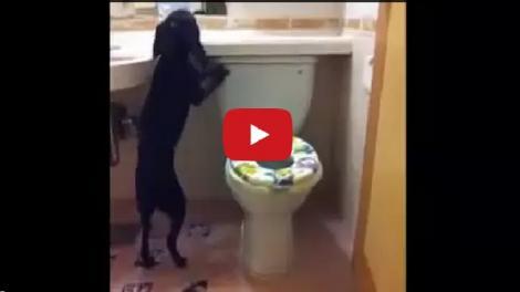 Asta DA educație: Și-a învățat câinele să folosească toaleta (VIDEO)