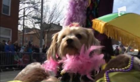 Cei mai excentrici căței au defilat la parada de Mardi Gras