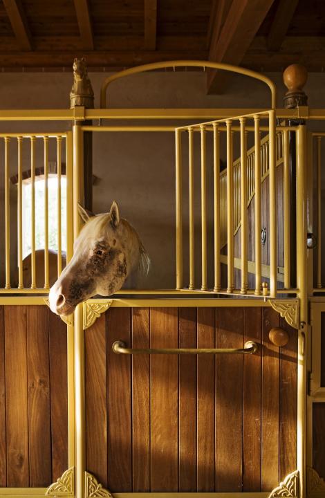 VIDEO! Un cal cu un dar SPECIAL: Are simţul umorului?