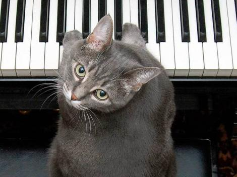 Trebuie să vezi asta! O pisică poate cânta împreună cu o întreagă orchestră