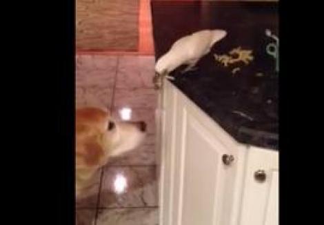 Senzațional! Un papagal hrănește un câine