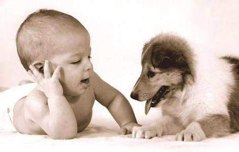GALERIE FOTO! Căței și bebeluși se întâlnesc pentru prima dată