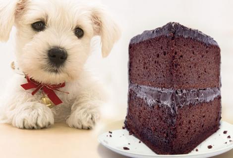 10 alimente periculoase pentru câini