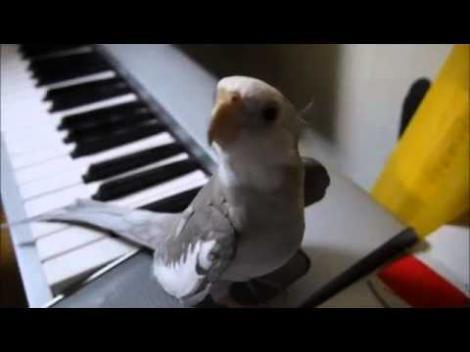VIDEO! O nimfă cântă după acordurile unui pian