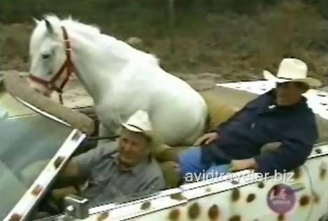 VIDEO! Calul se plimbă cu maşina, stă pe canapea, se uită la tv şi doarme în pat