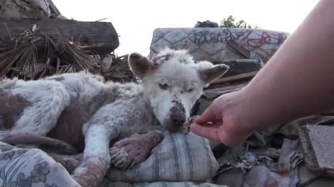A fost salvat dintre mormane de gunoi! Povestea unui căţel superb