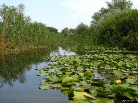 Delta Văcăreşti a devenit oficial rezervaţie naturală, protejată de lege