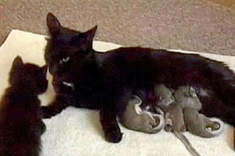 Înduioşător! O pisică a adoptat pui de veveriţă