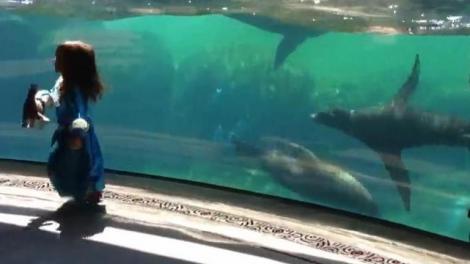 Uimitor! Cum reacţionează o focă atunci când vede o fetiţă căzând