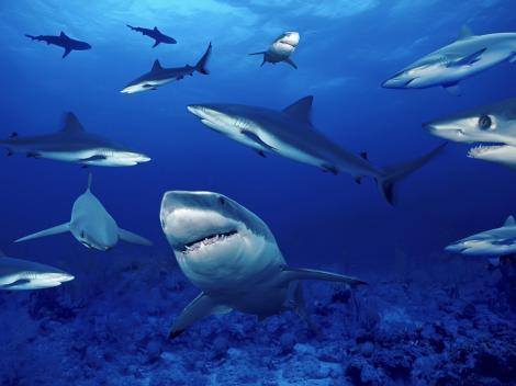 Un nou trend îți pune curajul la încercare: Şedinţă foto, printre rechini!