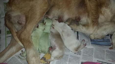 Maică, vine Apocalipsa peste noi! S-au născut doi cățeluși verzi!!!