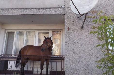 Oamenii de pe o stradă din Polonia au rămas blocaţi! Le zâmbea un cal, de pe balcon!